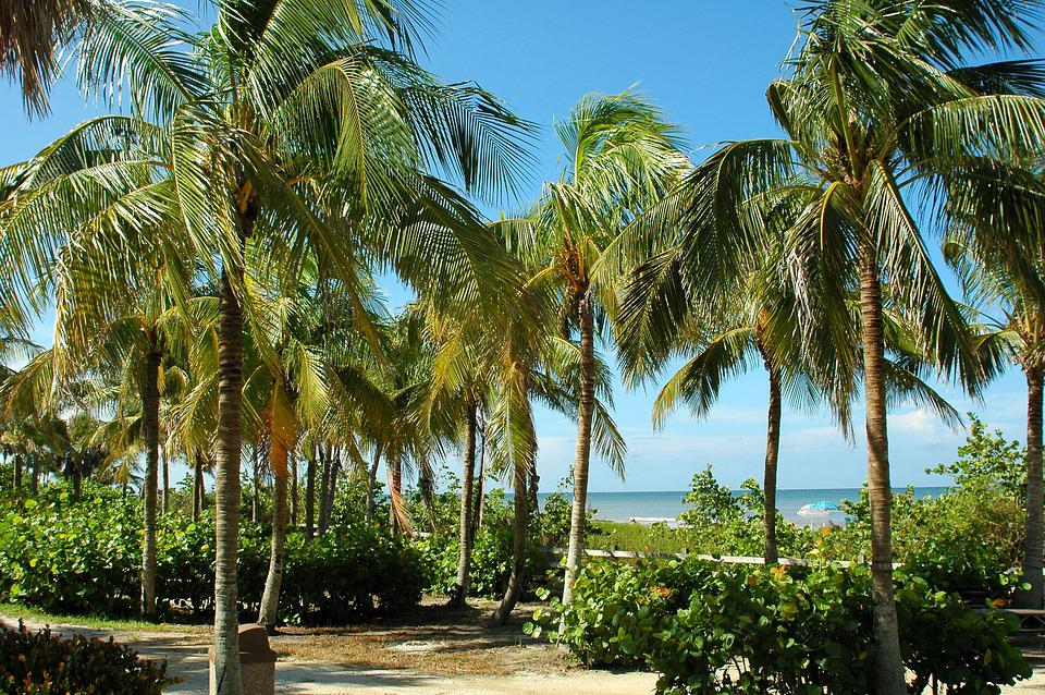 Key West, Florida, Tropical, Beach, Palm Trees, Tourism