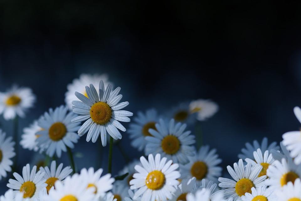 Keywords Fotomontáž, Flowers, Flowering, White, Flora