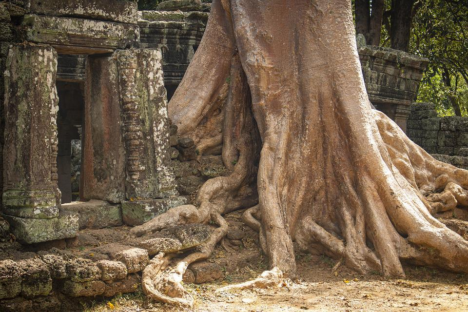 Tree, Log, Root, Middle Ages, Past, Forget, Time, Khmer