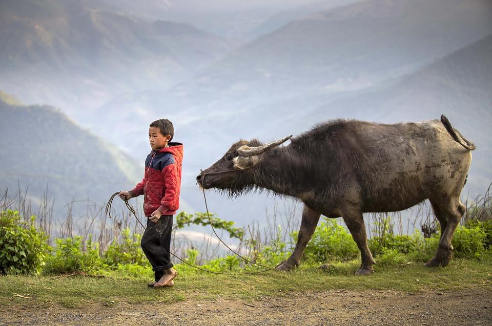 Boy, Buffalo Herder, Ha Giang, Vietnam, Kid, Child