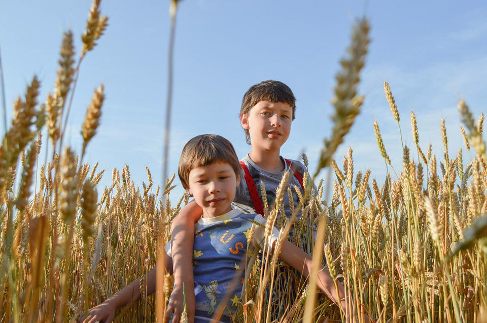 Kids, Field, Wheat, Smile, Nature