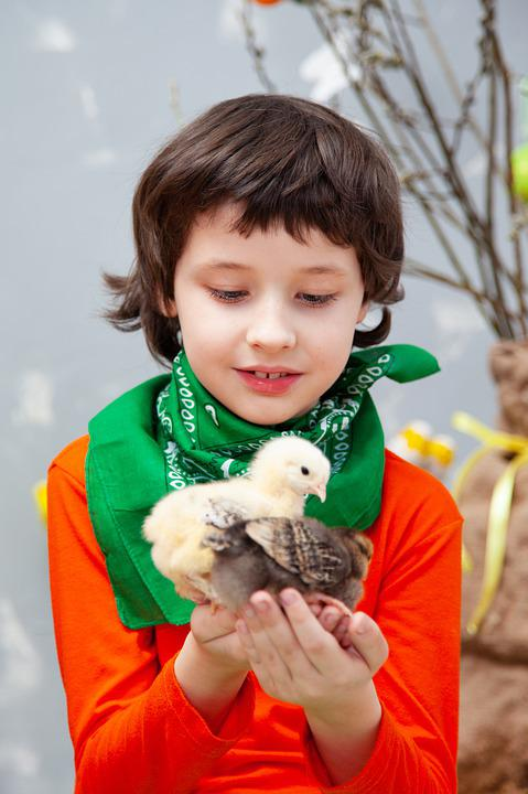 Easter, Chickens, Baby, Kids, Furry, Yellow, Bird, Egg