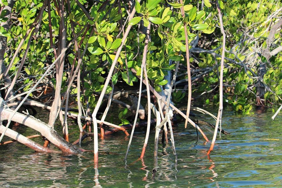 Kimberley, Mangroves, Australia, Coastal