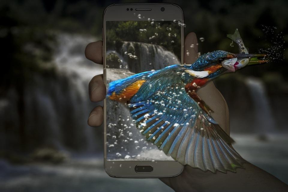 Manipulation, Kingfisher, Phone, Telephone, Waterfall