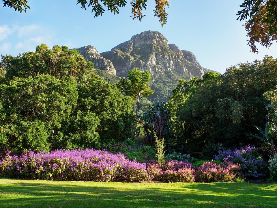 Kirstenbosch Botanical Gardens, Landscape, Nature, Tree
