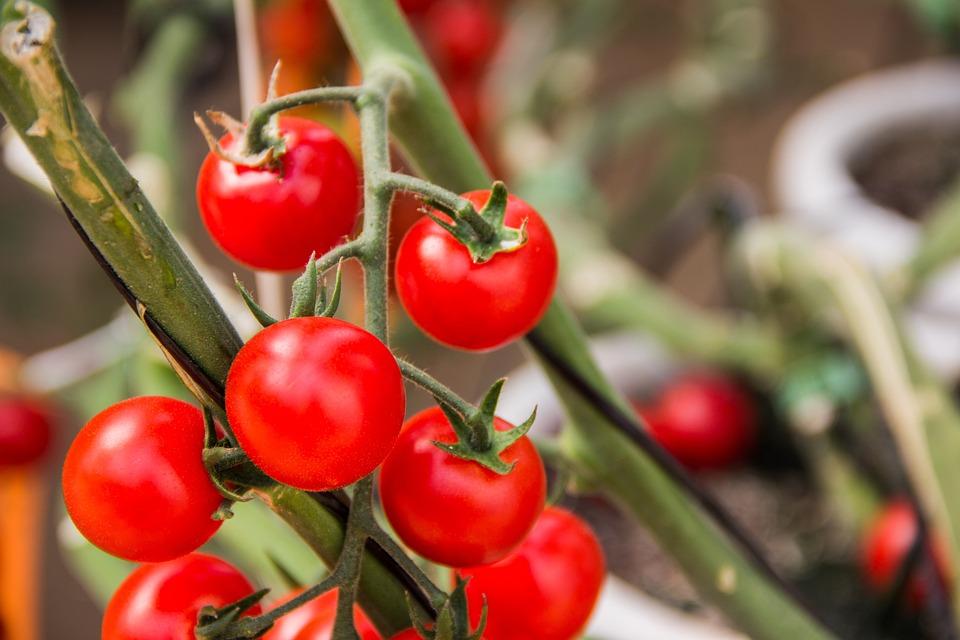 Tomato, Vegetables, Ingredient, Kitchen, Red, Salad