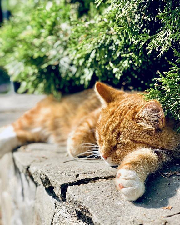 Cat, Redhead, Animal, Nature, Kitten, Cute