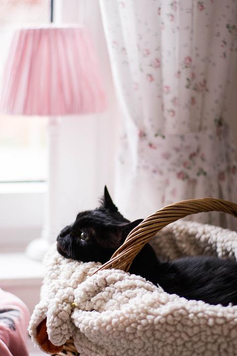 Cat, Animals, Kitten, Domestic Cat, Portrait, Curious