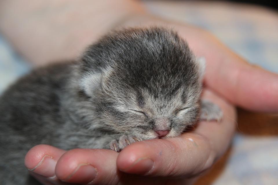 Cat Baby, Kitten, Sleep, Hand, Cat, Young Cat