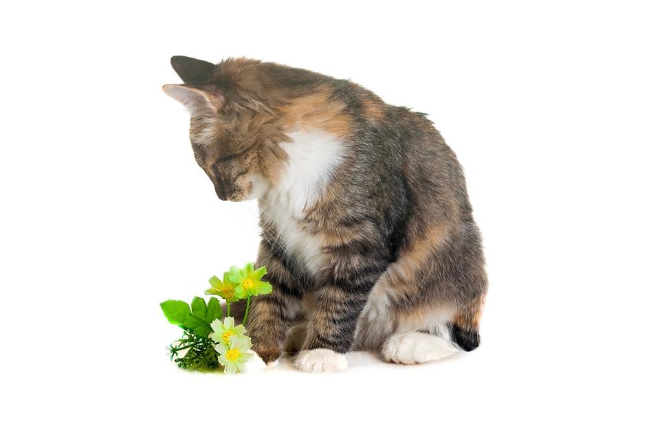 Kitten, Animals, Grey, Tricolor, Insulation, Cat