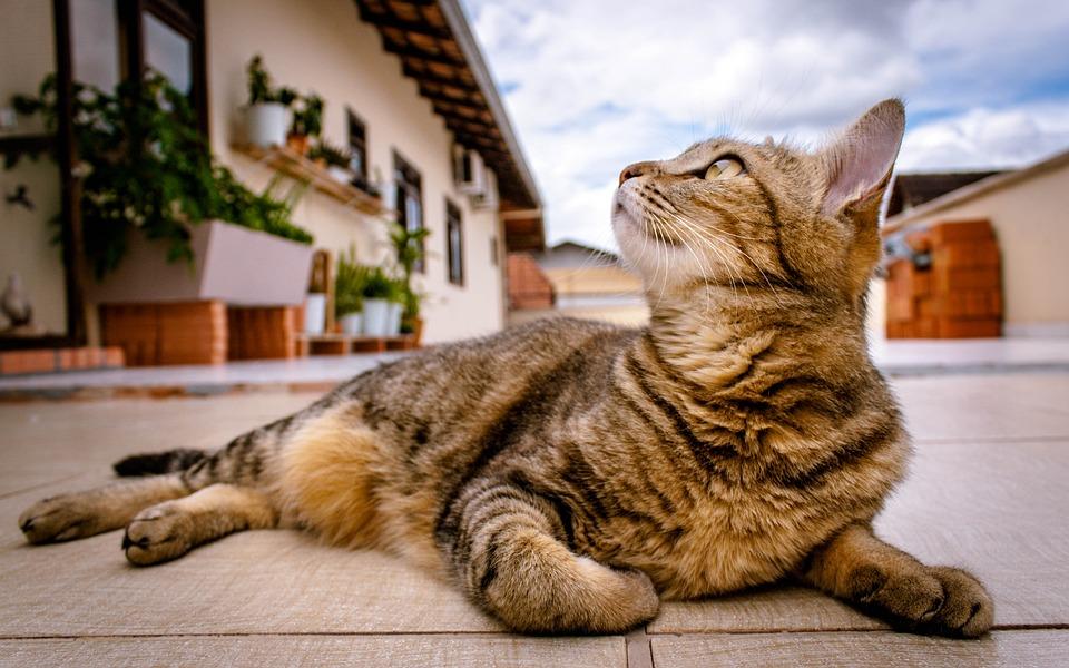 Cat, Kitten, Feline, Pet, Lying Down, Outdoors