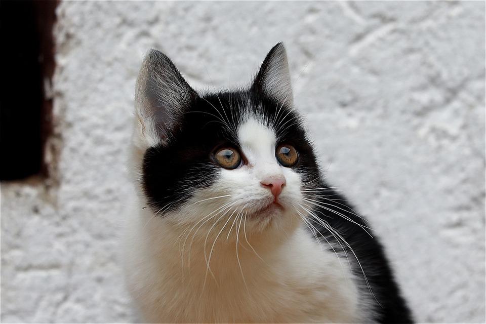 Cat, Kitten, Cute, Cat's Eyes, Portrait, Eyes, Pet