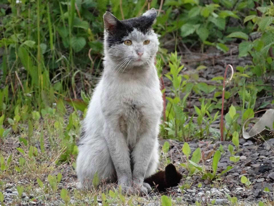 Cat, Animals, Kitten, Look, Domestic Cat, Homeless