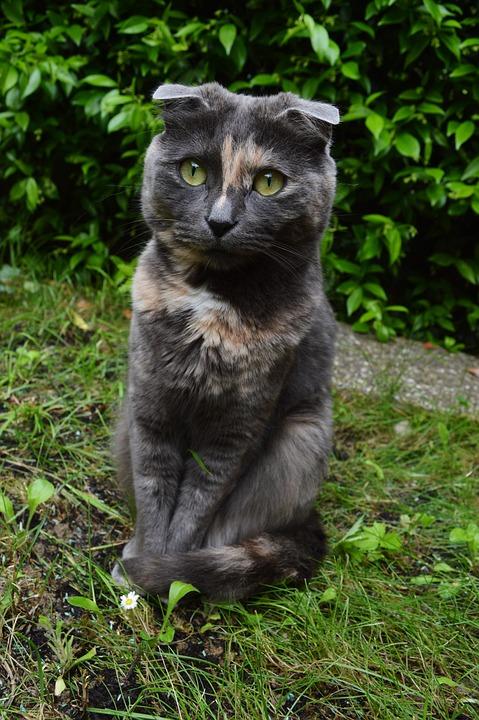 Cute, Animals, Pet, Cat, Kitten, Eyes, Yellow, Gray