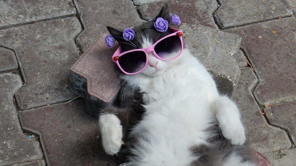 Kitten, Cat, Feline, Pets, Animals, Felines
