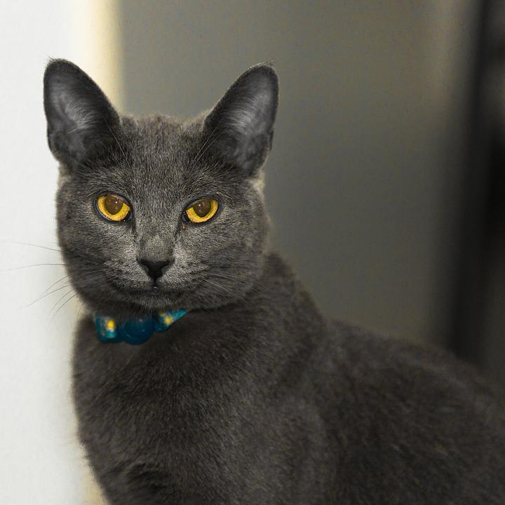 Cat, Animal, Kitten, Mammal, Eyes, Face, Grey, Fur