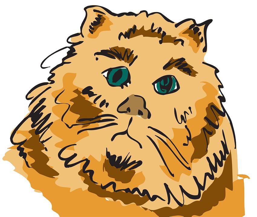 Cat, Head, Pet, Animal, Furry, Feline, Kitten, Whiskers