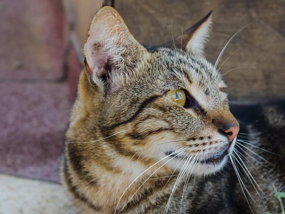 Cat, Stray, Animal, Cute, Homeless, Street, Kitten