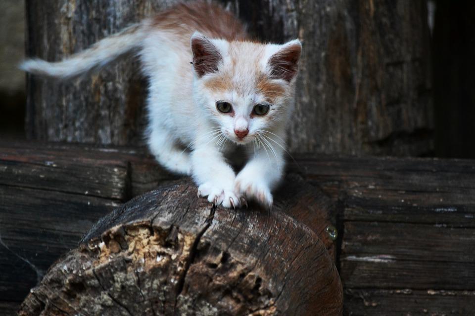 Cat, Kitten, Small, Rozkošné, Little