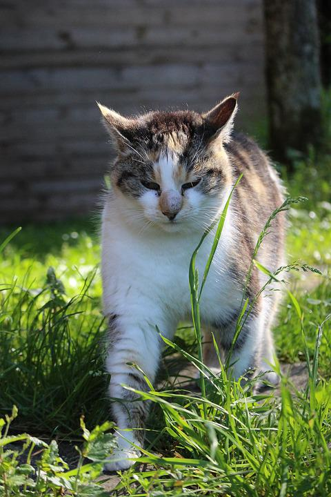 Cat, Meadow, Fur, Domestic Cat, Pet, Kitten, Nature
