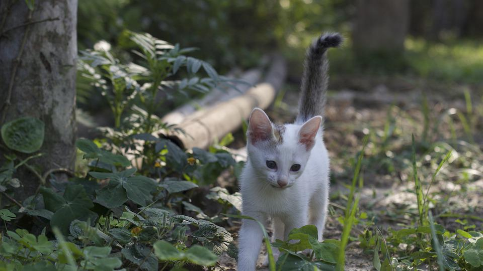 Cat, Pussycat, Kitty, Cute, Kitten, Pet, Animal