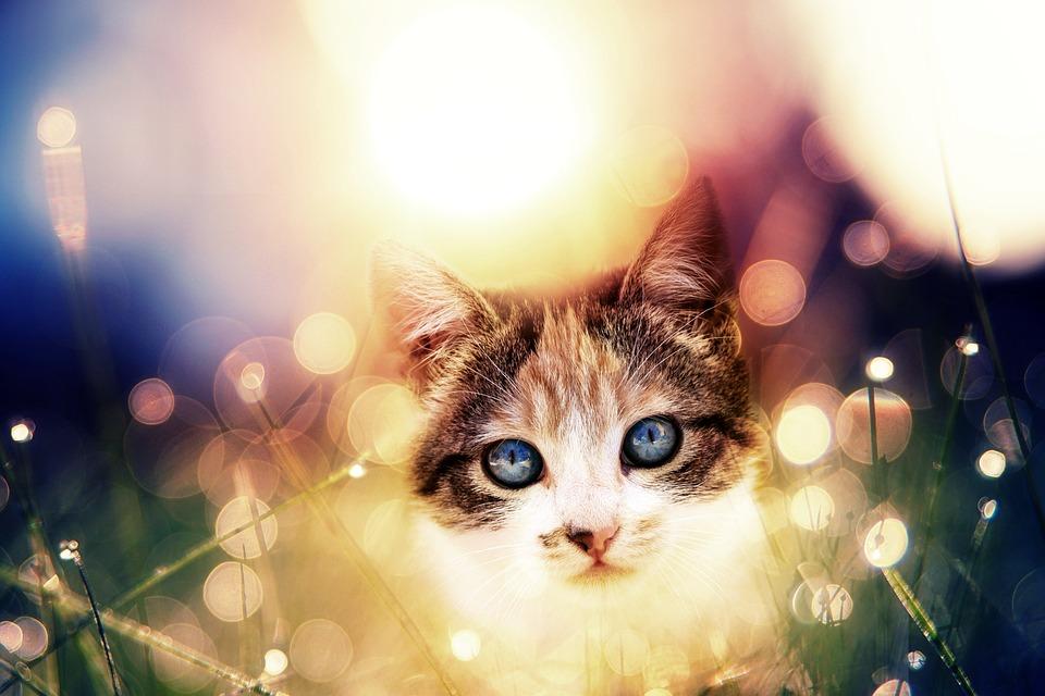 Cat, Feline, Portrait, Kitten, Cute, Great, Animal