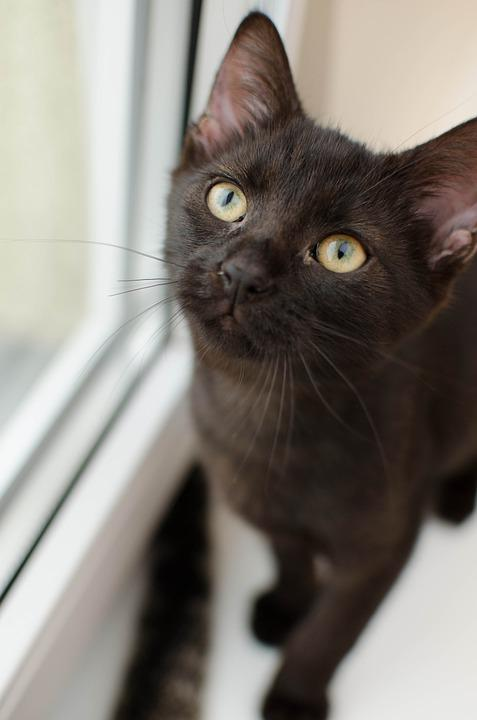 Black, Cat, Kitten, Home, Portrait, Eyes