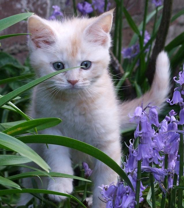 Kitten, Cat, Animal, Cute, Pet, Portrait, Small, Sweet