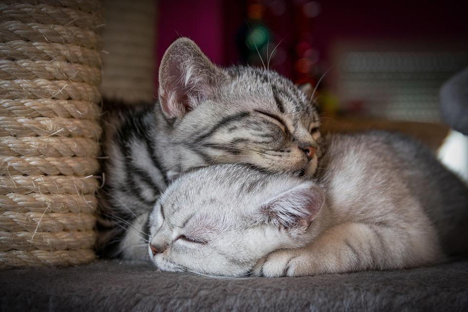 Kitten, Cat, Sweet, Charming, Cute, Pet, Baby Cat