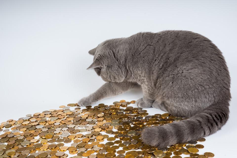 Cat, Kittens, Animals, Pet, Kitten, Surprise, Money