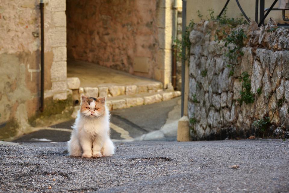 Grumpy Cat, Grumpy, Cat, Kitty, Animal, Feline, Pet