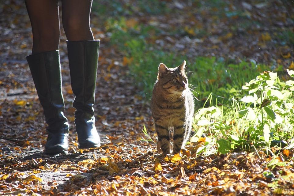 Cat, Autumn, Animal, Animals, Kitten, Kitty, Foliage