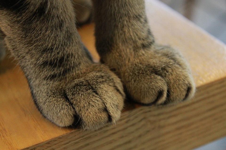 Paws, Cat, Claw, Paw, Claws, Feline, Kitty, Mammal