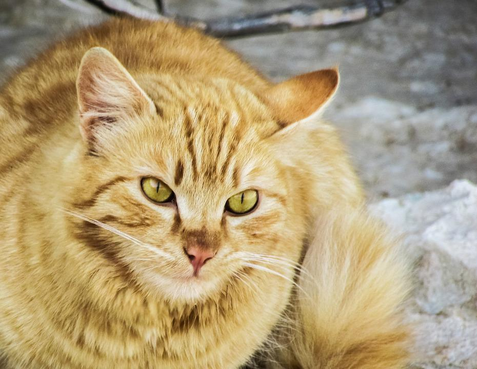 Cat, Stray, Cute, Homeless, Kitty, Looking, Portrait