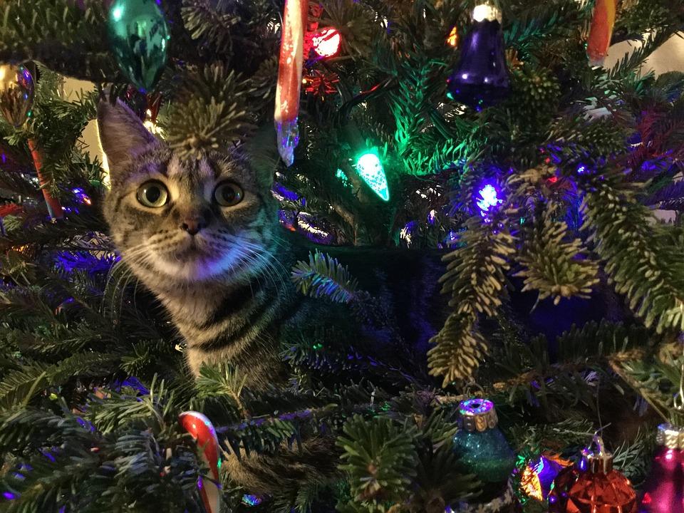 Free photo Kitty Feline Christmas Tree Pet Animal Cute - Max Pixel