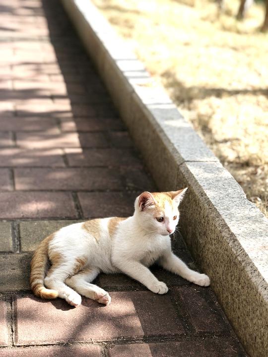 Kitten, Kitty, Kids, Cute, Sunshine, Lawn