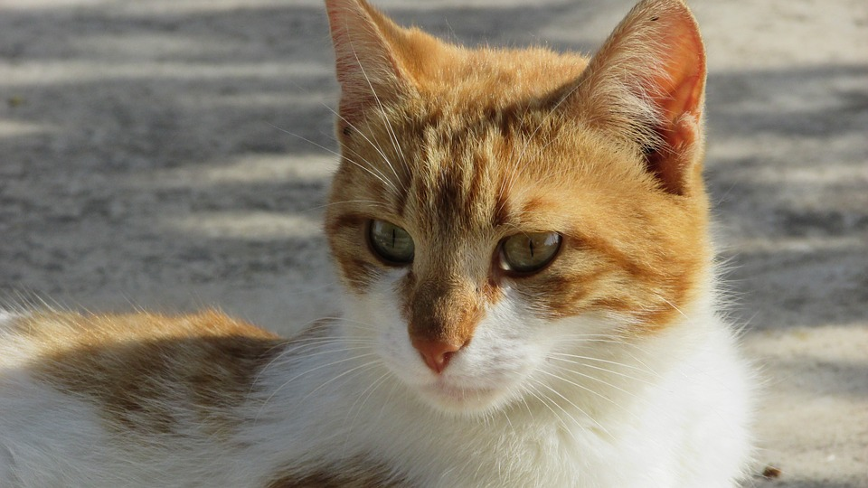 Cat, Stray, Cute, Young, Kitty, Looking