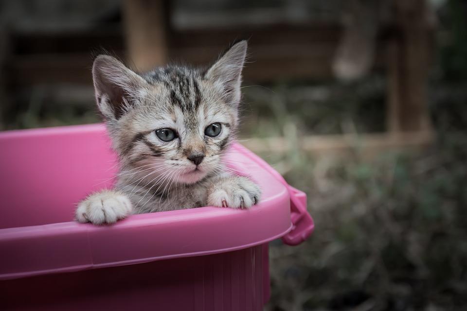 Kittycat, Kitten, Cat, Animal, Animals, Pets