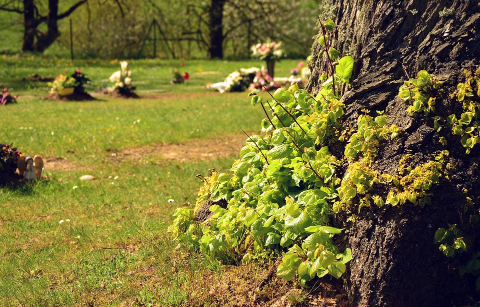 Cemetery, Tree Shoots, Log, Leaves, Knock Out, Live New