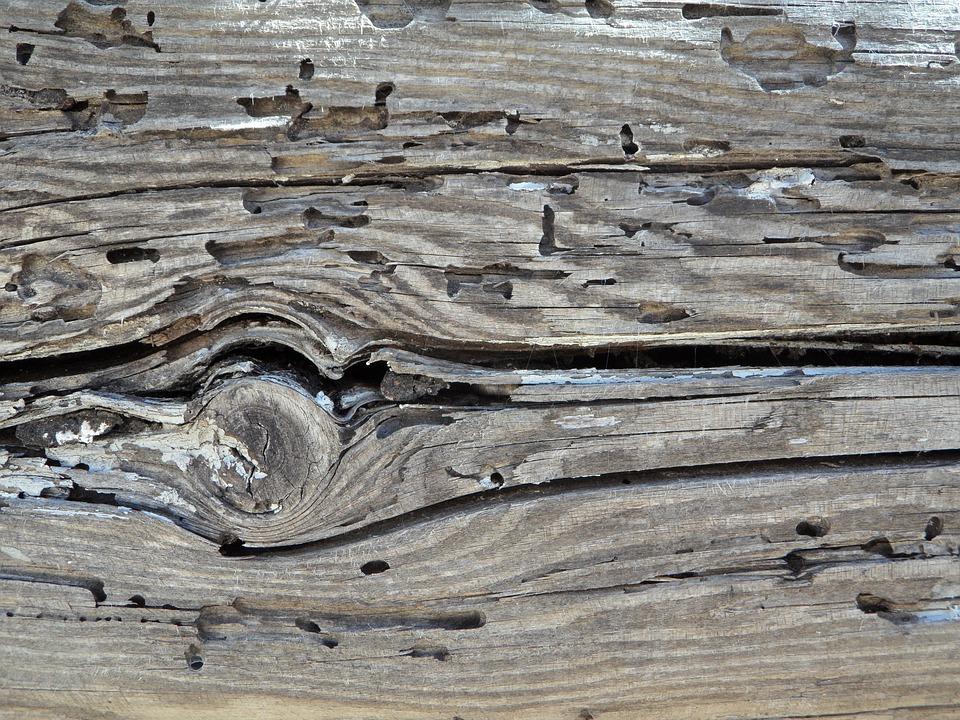 Wood, Wood Texture, Feeding, Knothole, Brown