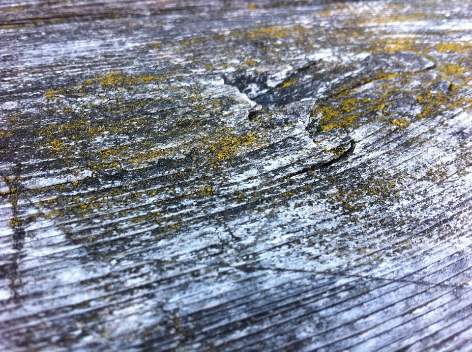Wood, Structure, Knothole, Tree, Moss, Wood Surface
