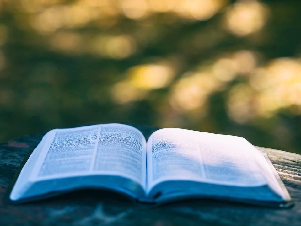 Blur, Book, Bokeh, College, Education, Knowledge