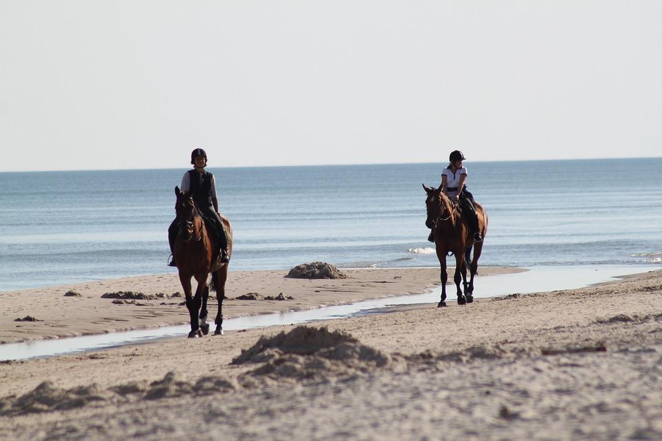 Horses, Horse, Horseback Riding, Sand, Konik, Safety