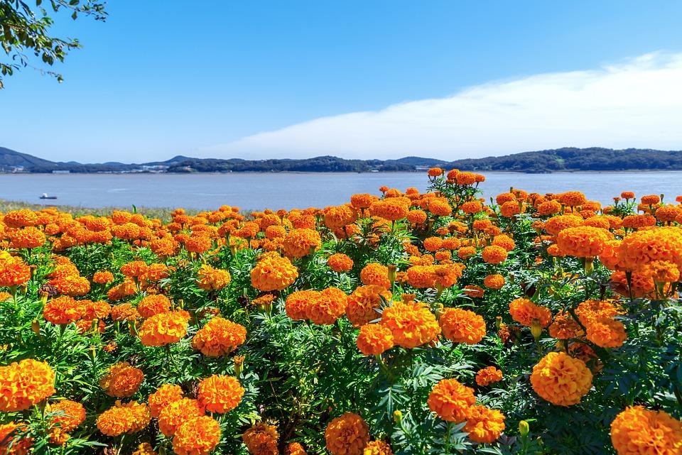 Korea, Incheon, Ganghwado, Salts Your Health