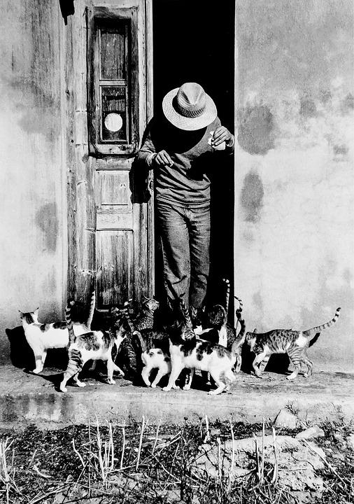 Greece, Kos, Kos Island, Europe, Cat, Cats, Felines