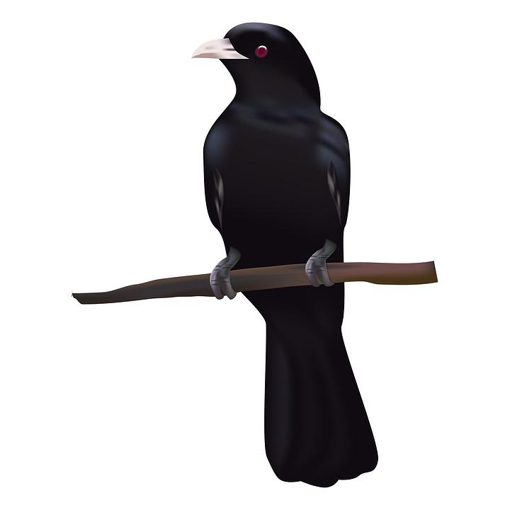 Bird, Koyal, Sitting Bird, Animal, Black Bird, Cuckoo