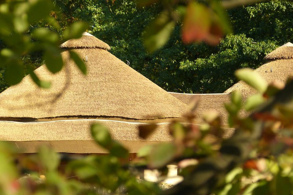 Thatched Roof, Zoo, Krefeld, Nature