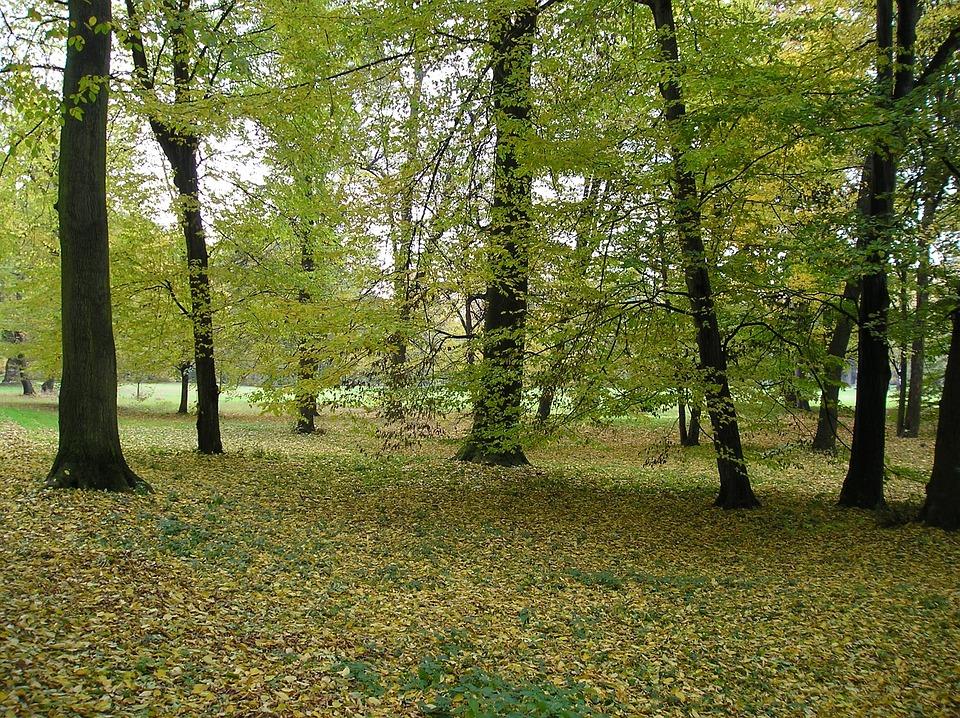 Kroměříž, Chateau Garden, Nature, Autumn, Park