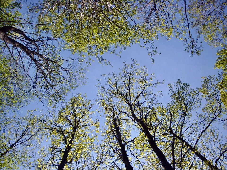 Nature, Trees, Sky, Forest, Krone