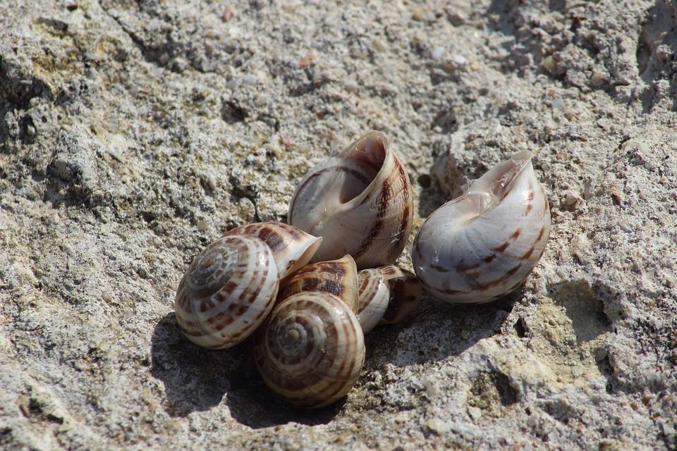 Nature, Shell, Sand, Coast, Beach, Sea, Krupnyj Plan